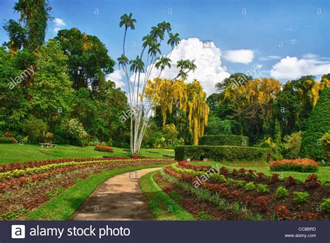 royal peradeniya botanical gardens near kandy sri lanka the park is stock photo royalty free