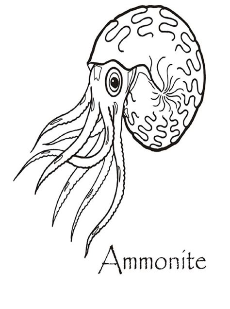 free coloring pages of fossils