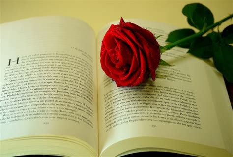 the roses books 25 beautiful and flower images quotes