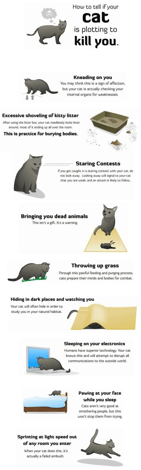 how to your to kill how to tell your cat is plotting to kill you random picture pictures