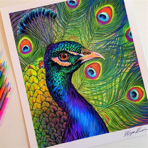 drawing with colored pencils colored pencil peacock drawing artworks