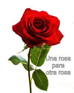 imagenes de rosas para un amor im 225 genes de una rosa im 225 genes
