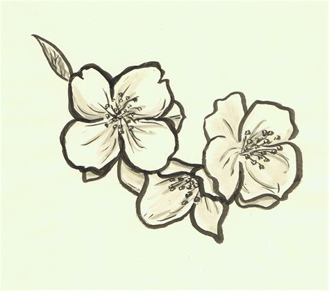jasmine flower tattoo designs flower by acinonyx jubatus on deviantart