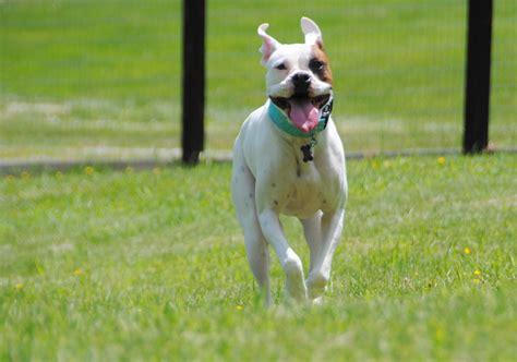deaf dogs rock recall for deaf dogs deaf dogs rock