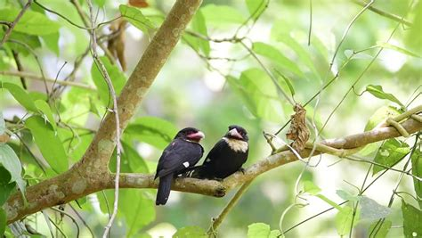 rare birds are paired during mating season bird dusky