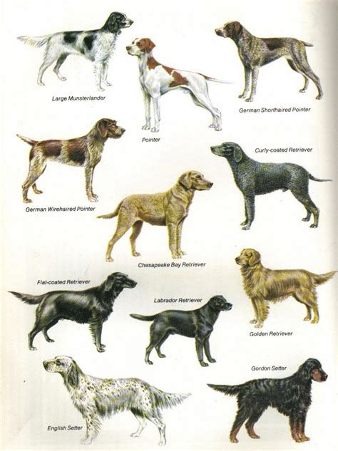sporting dogs sporting dogs history