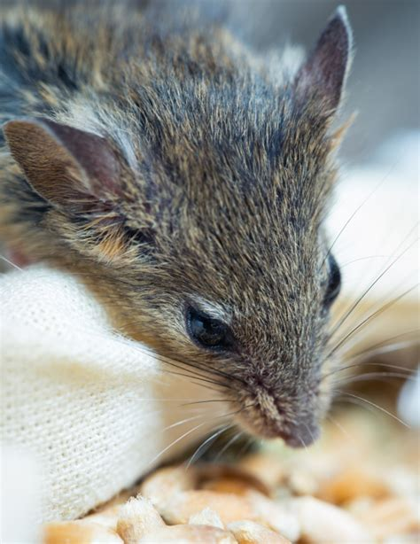 generation anticoagulant rodenticides rentokil techs 1st in uk to pass new rsph rodenticides