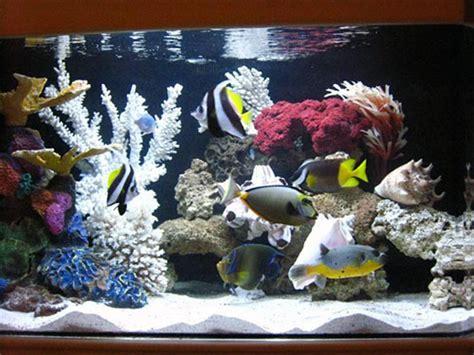 Lipstik Avione service vente conseil et maintenance aquarium eau de mer