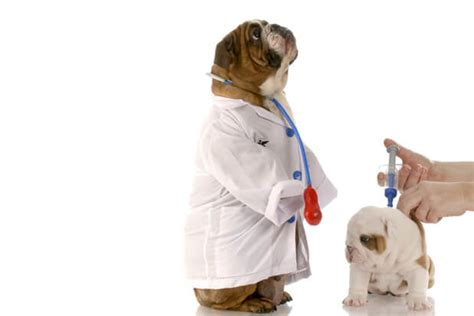 how often do puppies get how often should you vaccinate your stayloyal
