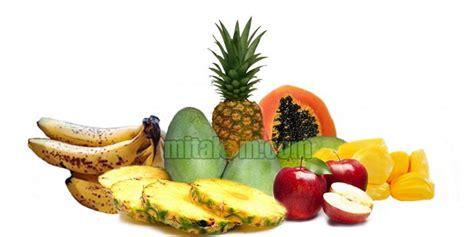 membuat zpt perangsang buah cara membuat mol buah serta fungsi dan manfaatnya