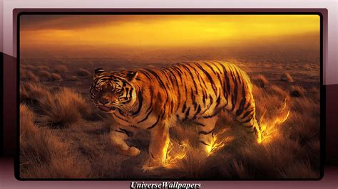 fire tiger wallpaper  android apk