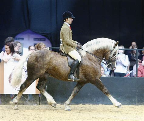 Section D Dressage by Cob Stallions At Stud