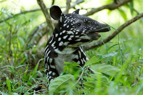 Floor Animals by List Wildlife Press