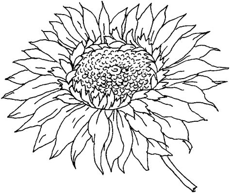 sun and flowers coloring book for adults featuring beautiful and creative floral designs for stress relieve and sweet relaxation books coloring pages flower coloring pages
