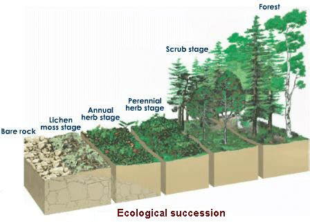 tropical plant biology impact factor ecological succession causes biology tutorvista
