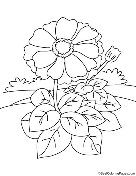 Coloring Page Zinnia by Free Zinnia Flower Coloring Pages