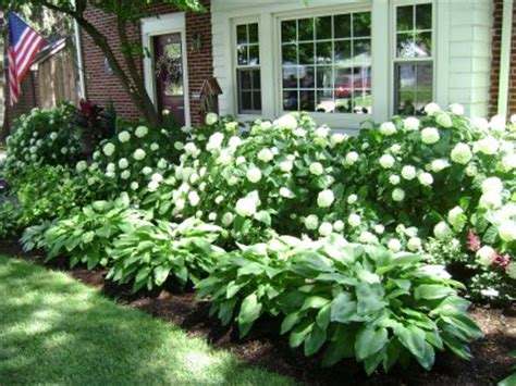 Landscaping Ideas Hydrangeas Hydrangea Landscaping On Southern Landscaping