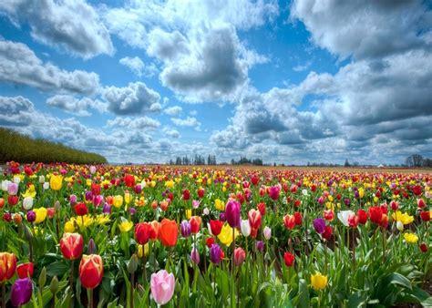 imagenes bellas hermosas y preciosas mira este fondo de pantalla de flores preciosas y mucho
