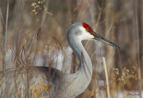 11 fun birding events in early october birdwatching