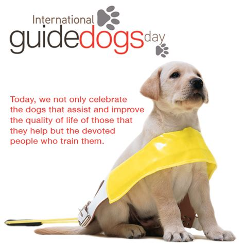 puppy guide 5 facts about guide dogs dgp for pets