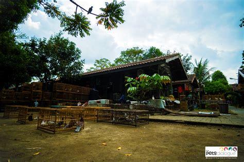 Sho Bsy Jogja shocking of the popular animal market in jogja the