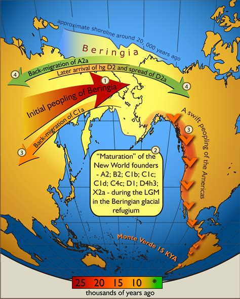 american migration from asia map map showing migration of humans from asia to the americas