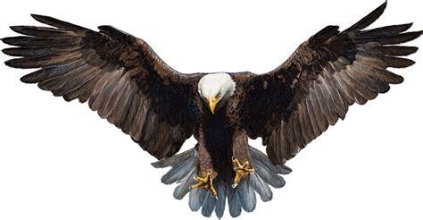 imagenes png aguila imagens png 193 guias eagles png imagens para photoshop