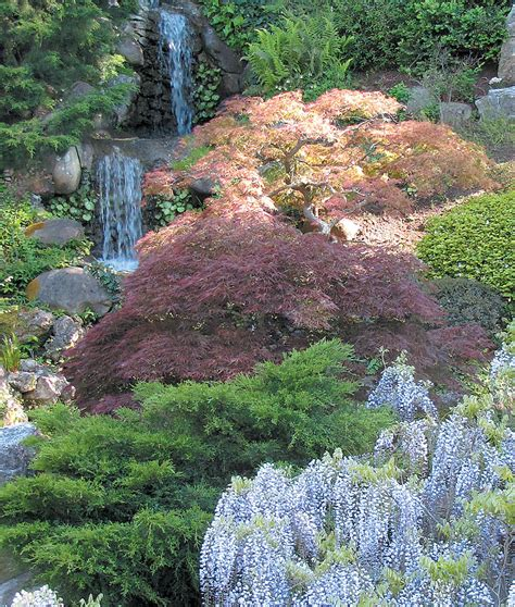 landscaping with maple trees drop dead gorgeous japanese maple garden landscaping design and decoration using brown
