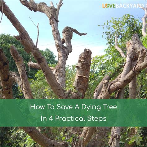 how to save a dying plant how to save a dying plant how to save a dying tree in 4 practical steps feb 2018