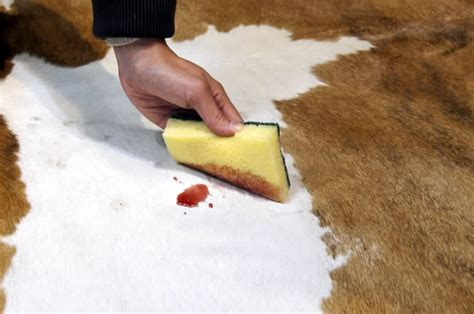 how to care for a cowhide rug cowhide cleaning care furhomerugs