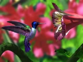 colorful hummingbirds hummingbird desktop background weneedfun