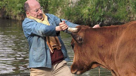 film la vache la vache bande annonce youtube