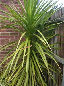 Outside Plants Outdoor Yucca Plant Images
