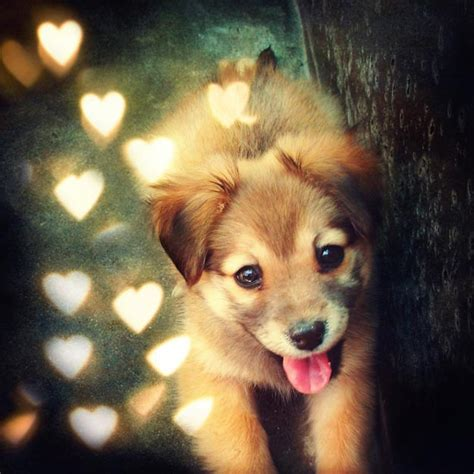 fluffy puppys 20 puppy pictures smashing photoz