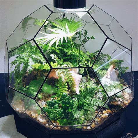 best plants for closed terrariums terrarium basics ohsum mossum terrariums