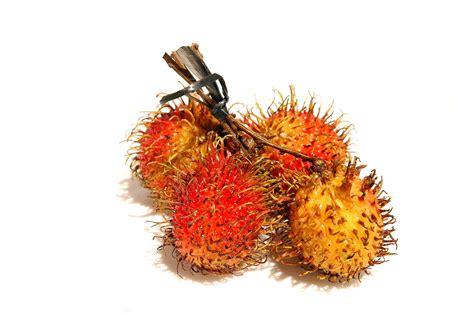 seasonal fruits    malaysia expatgo