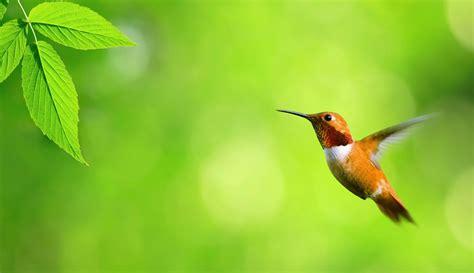wallpaper for desktop birds birds hd wallpapers