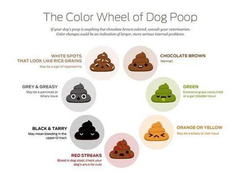the color wheel of dog poop  sportleash