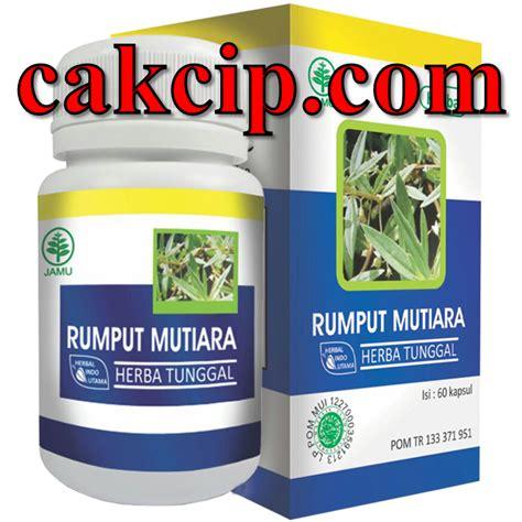 Distributor Hiu Silangsing Herbal Pelangsing rumput mutiara hiu gresik jual rumput mutiara herbal indo utama asli