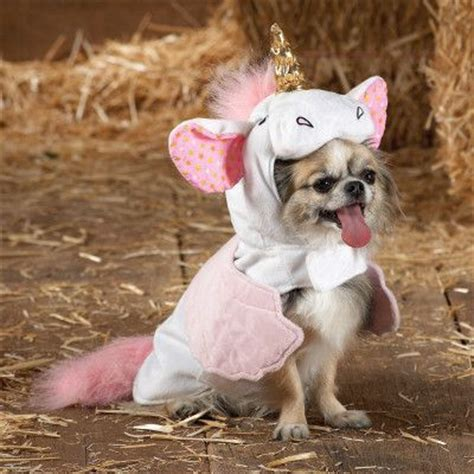 unicorn puppy my future unicorn canis lupus familiaris