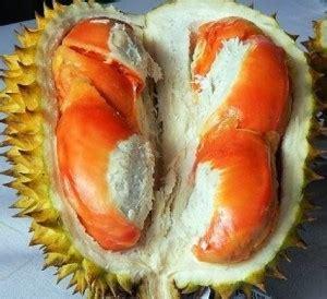 inilah jenis jenis  gambar durian   populer