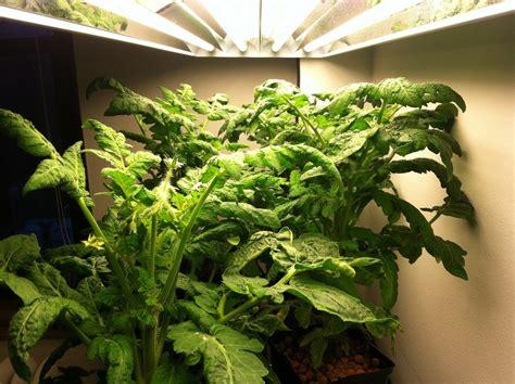 Pupuk Untuk Bunga Taman coba hidroponik untuk taman rumah minimalis rumah dan