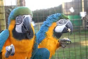 Macaws For Adoption » Home Design 2017