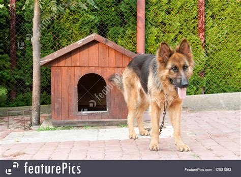 german shepherd dog house german shepherd dog house plans numberedtype