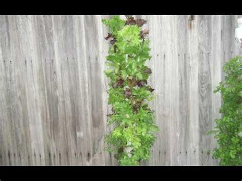 Vertical Garden Lettuce Vertical Garden Lettuce