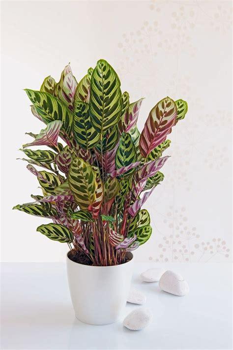 Plantes Appartement Sombre by Plante D Int 233 Rieur Laquelle Choisir Quand On N A Pas La