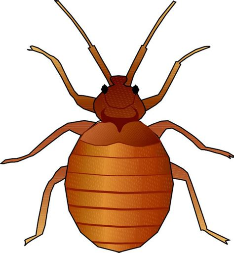 Ie8 Outline Bug by Orange Bug Cliparts Free Clip Free Clip On Clipart Library