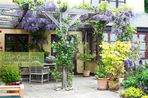 Patio Next To House Gap Gardens Pergola With Wisteria And Clematis Growing