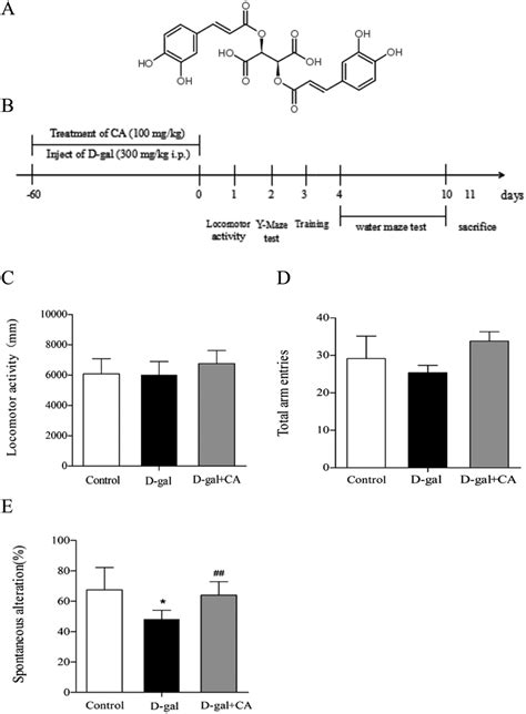 Chicoric acid supplementation ameliorates cognitive