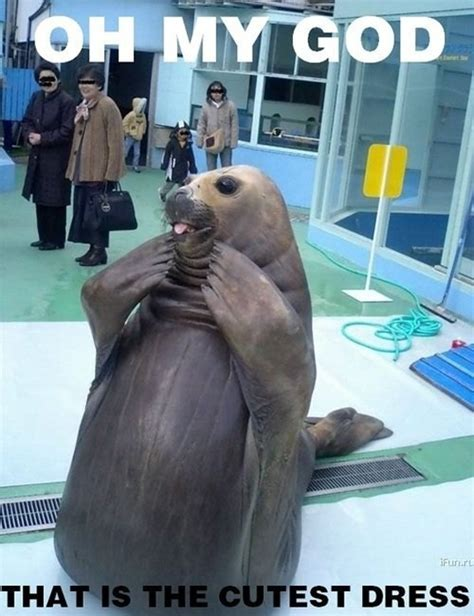 Seal Of Approval Meme - omg funny pictures quotes pics photos images